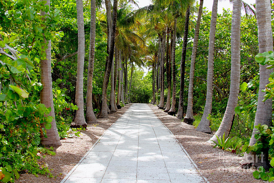 Florida Walkway Photograph  - Florida Walkway Fine Art Print