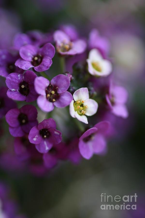 Flower Ball Photograph