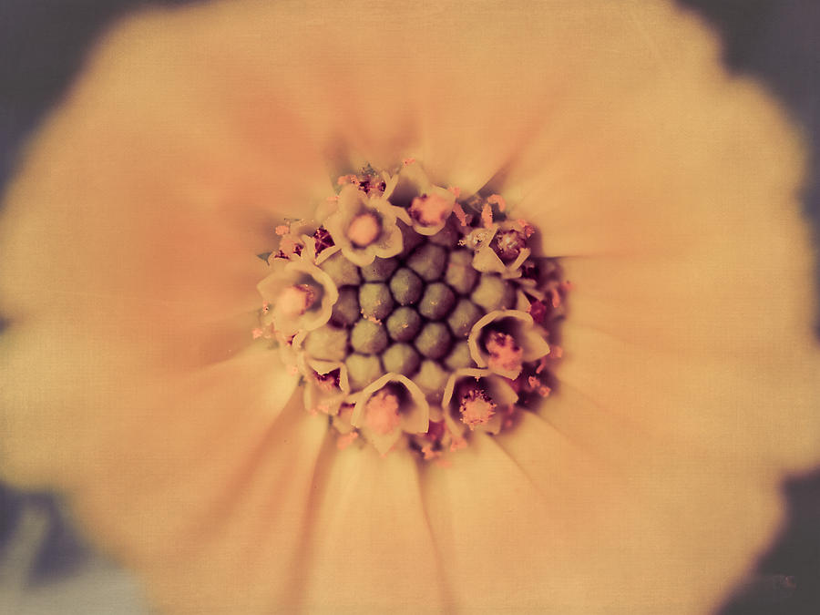 Flower Beauty Photograph - Flower Beauty IIi by Marco Oliveira