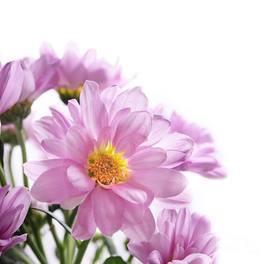 Floral Pyrography - Flower Bouquet by Jelena Jovanovic