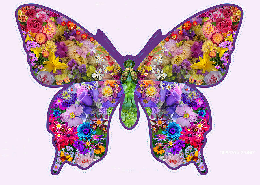 Flower Butterfly Photograph
