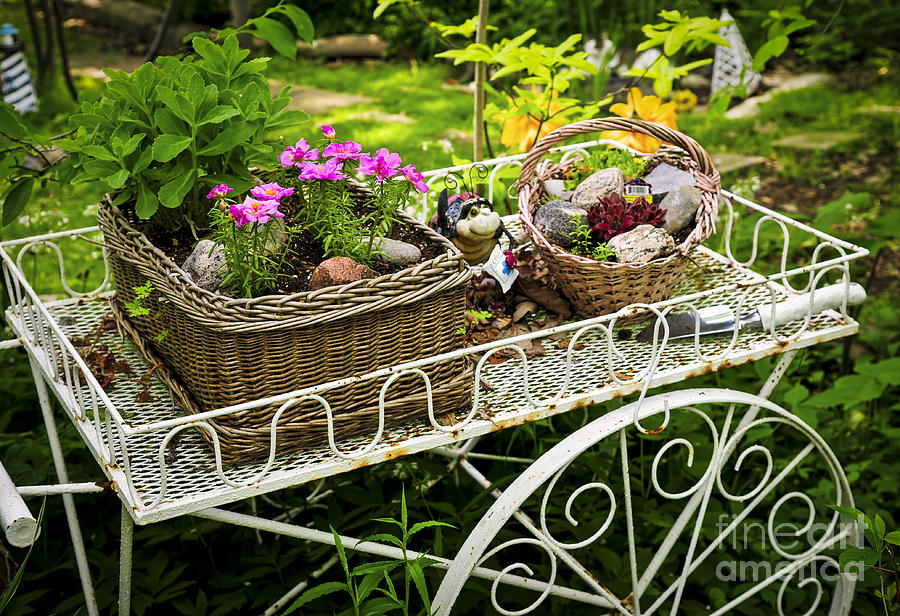 Flower Cart In Garden Photograph  - Flower Cart In Garden Fine Art Print