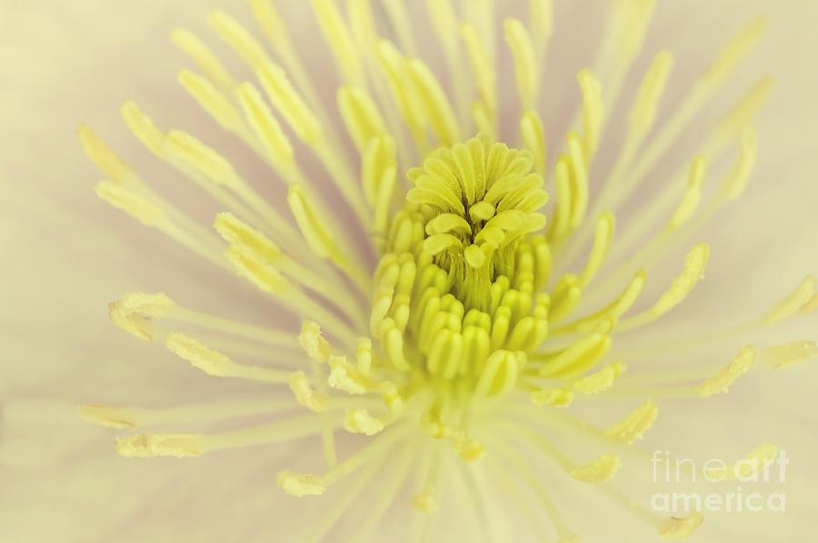 Flower Centre Photograph