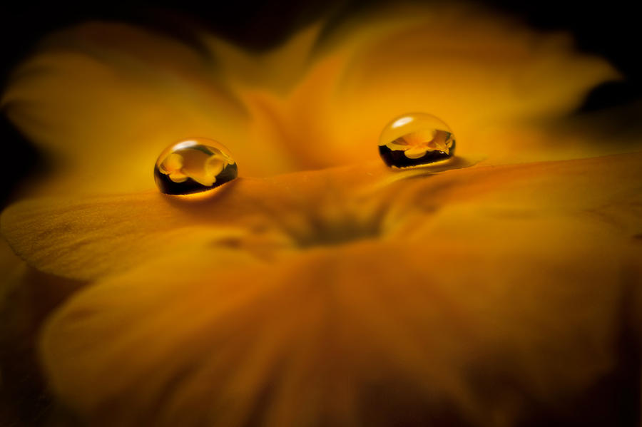 Droplets Photograph - Flower Fairy by Ivelina G