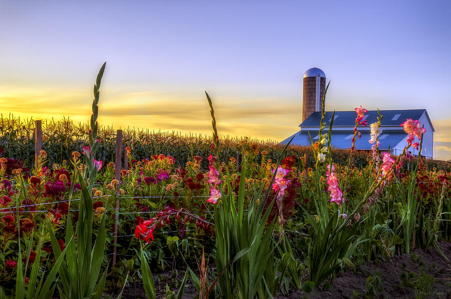 Mark Papke Photograph - Flower Farm by Mark Papke