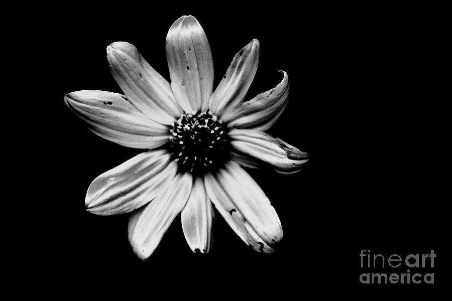 Flower In The Dark Photograph