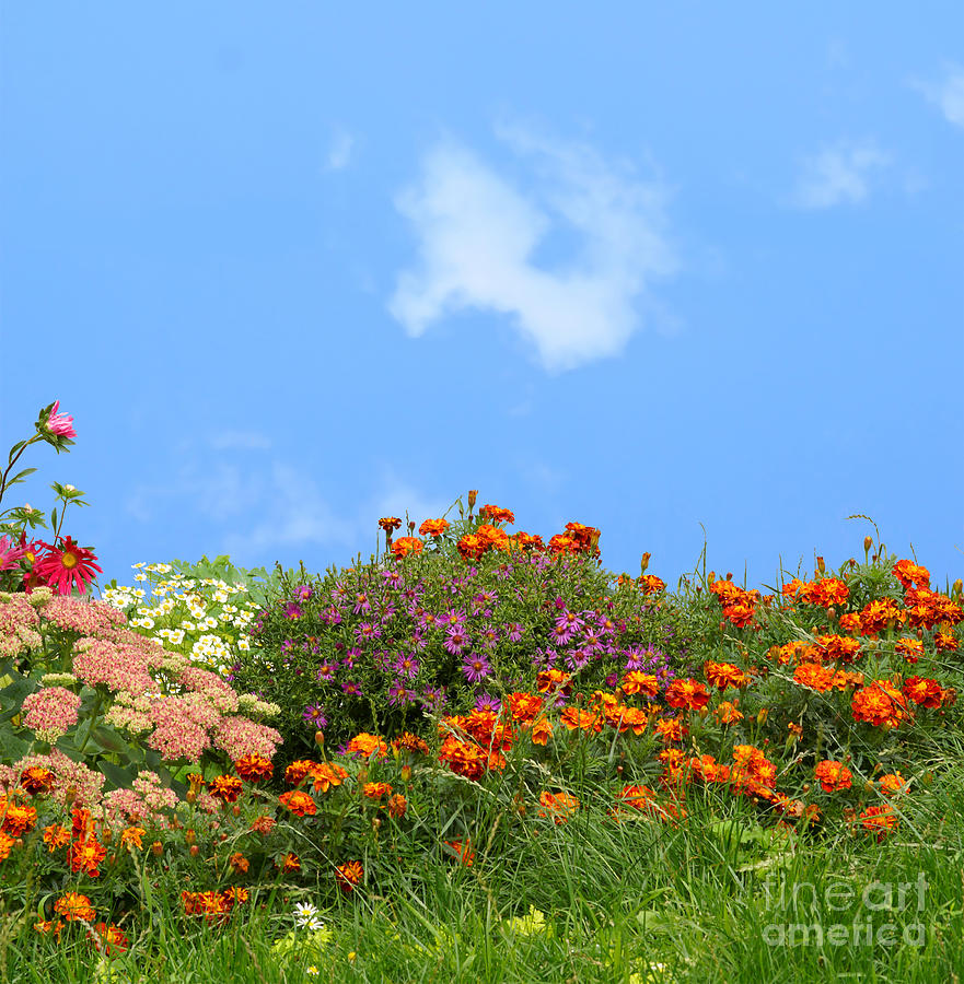Flower Landscape Art Photograph