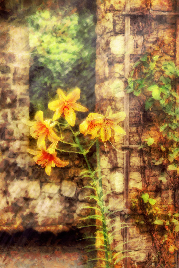Flower - Lily - Yellow Lily Photograph