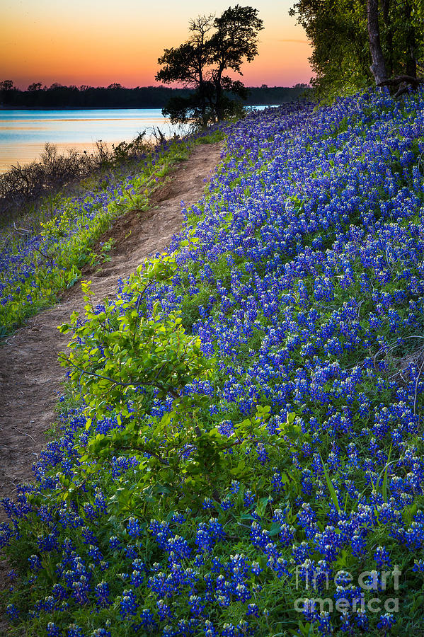 Flower Mound Photograph