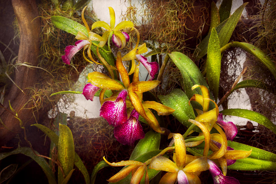 Flower Photograph - Flower - Orchid - Cattleya - Theres Something About Orchids  by Mike Savad