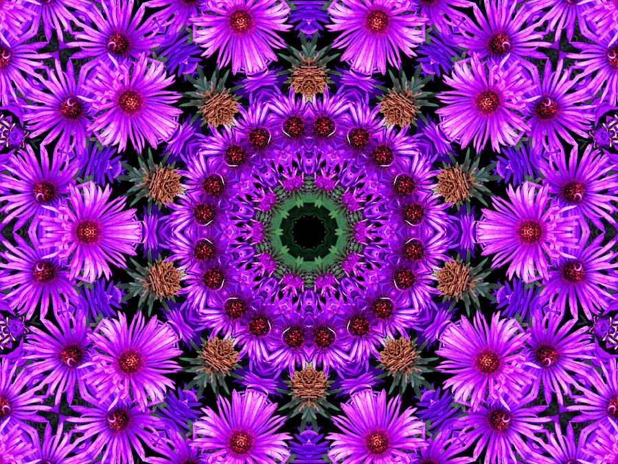 Flower Power Photograph  - Flower Power Fine Art Print