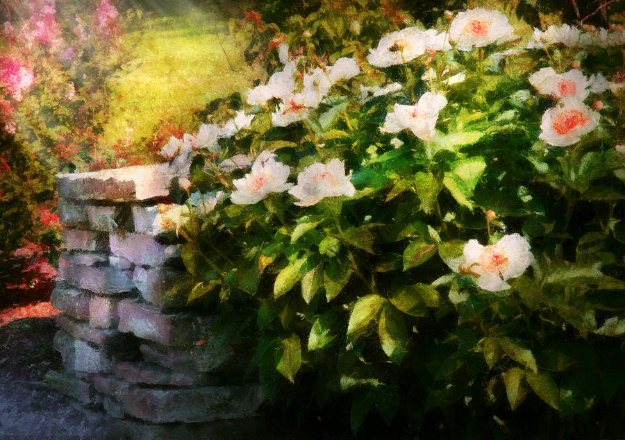 Flower - Rose - By A Wall  Photograph  - Flower - Rose - By A Wall  Fine Art Print