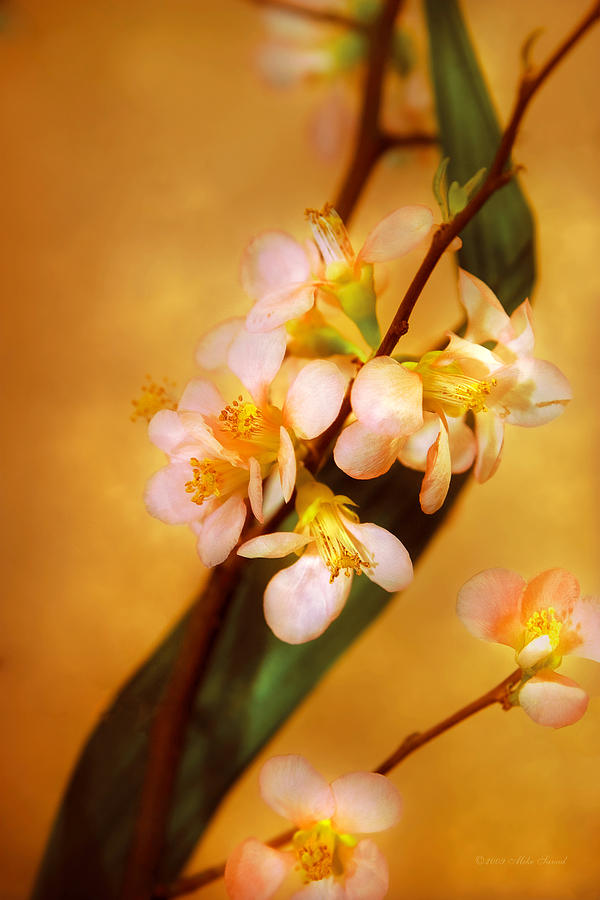 Cherry Flower Photograph - Flower - Sakura - A Touch Of Spring by Mike Savad