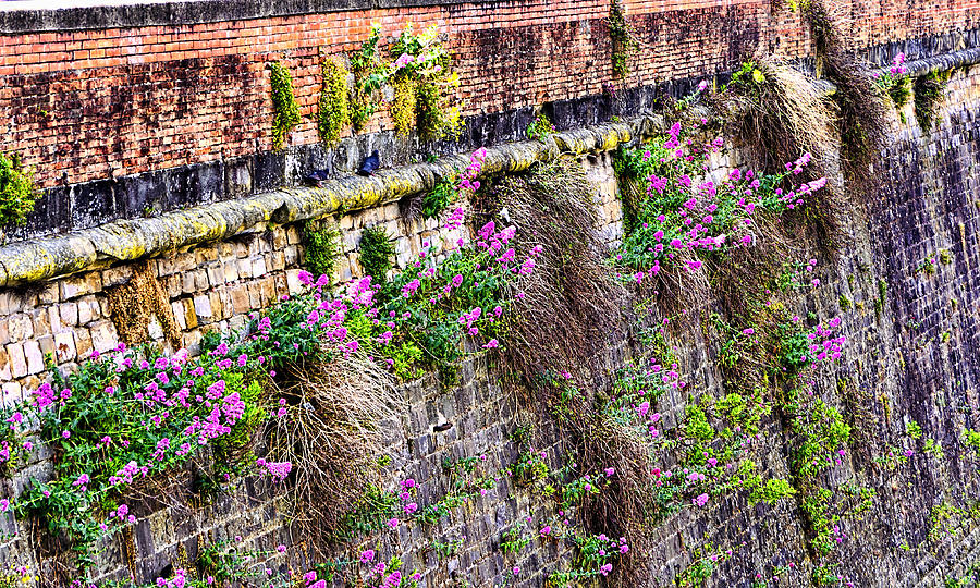 Flower Wall Along The Arno River- Florence Italy Photograph