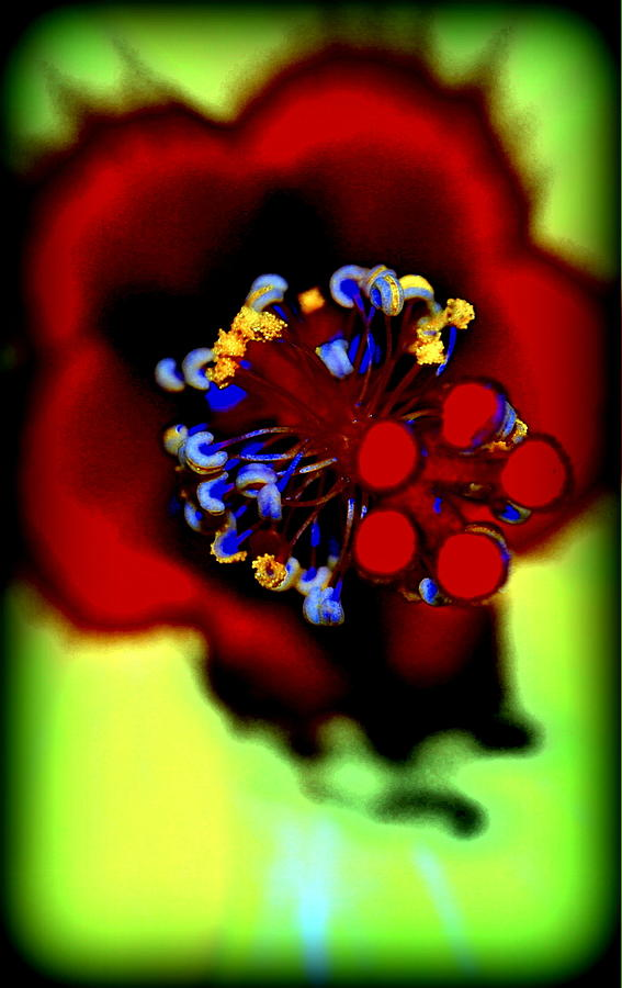 Hibiscus Photograph - Flower Within by Kathy Sampson