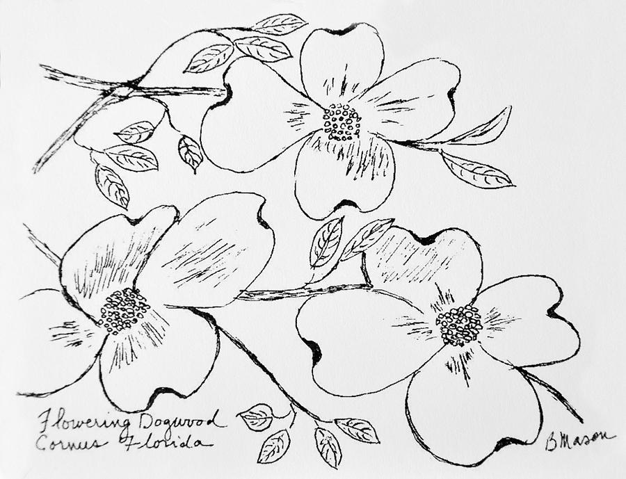 Flowering Dogwood Flower Drawing