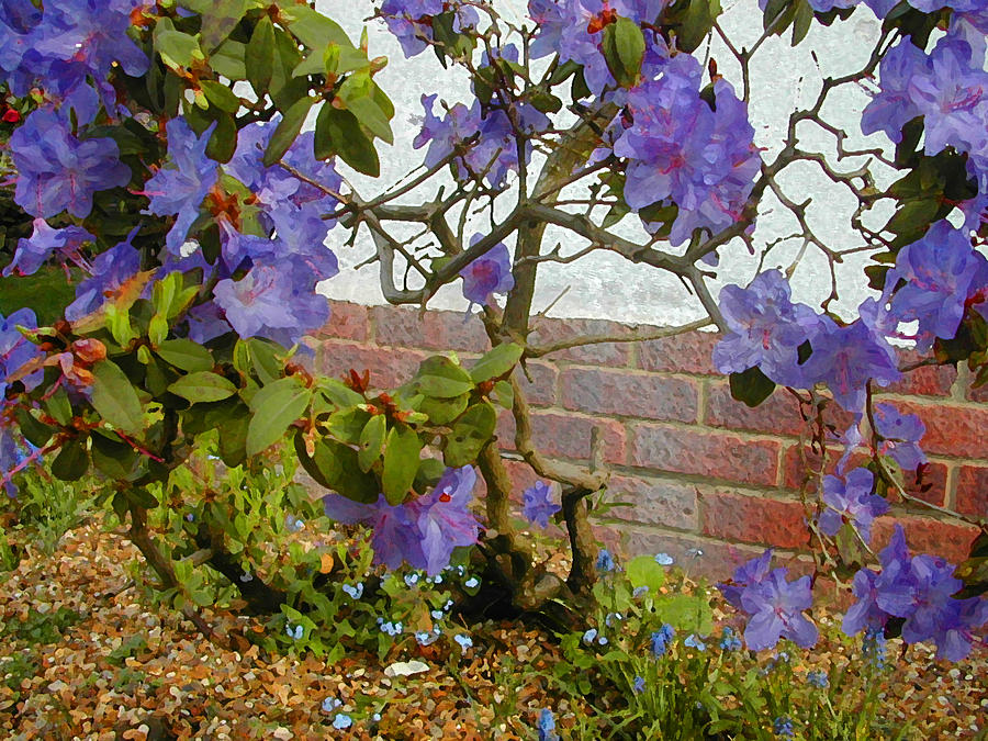 Flowers Against The Wall Photograph