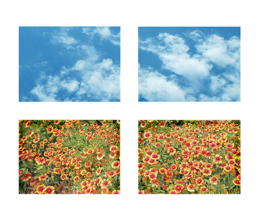 Flowers And Sky Photograph  - Flowers And Sky Fine Art Print