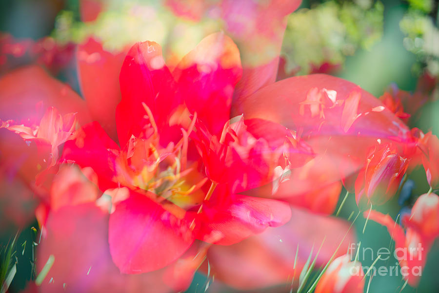 Flowers Bloom In Multiples Photograph
