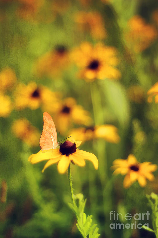 Flowers Of Summer Photograph  - Flowers Of Summer Fine Art Print