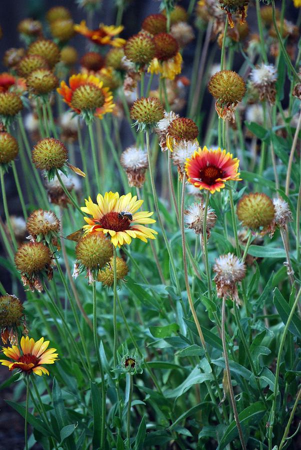 Flowers oregon by janet dematteis for Oregon craft floral