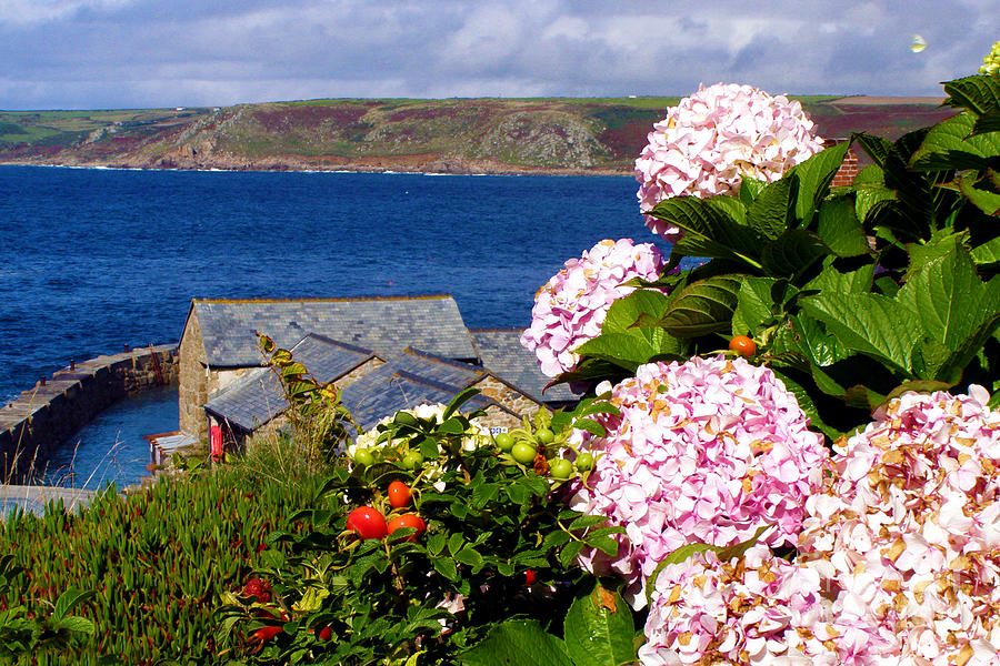 Flowers With A Sea View Photograph