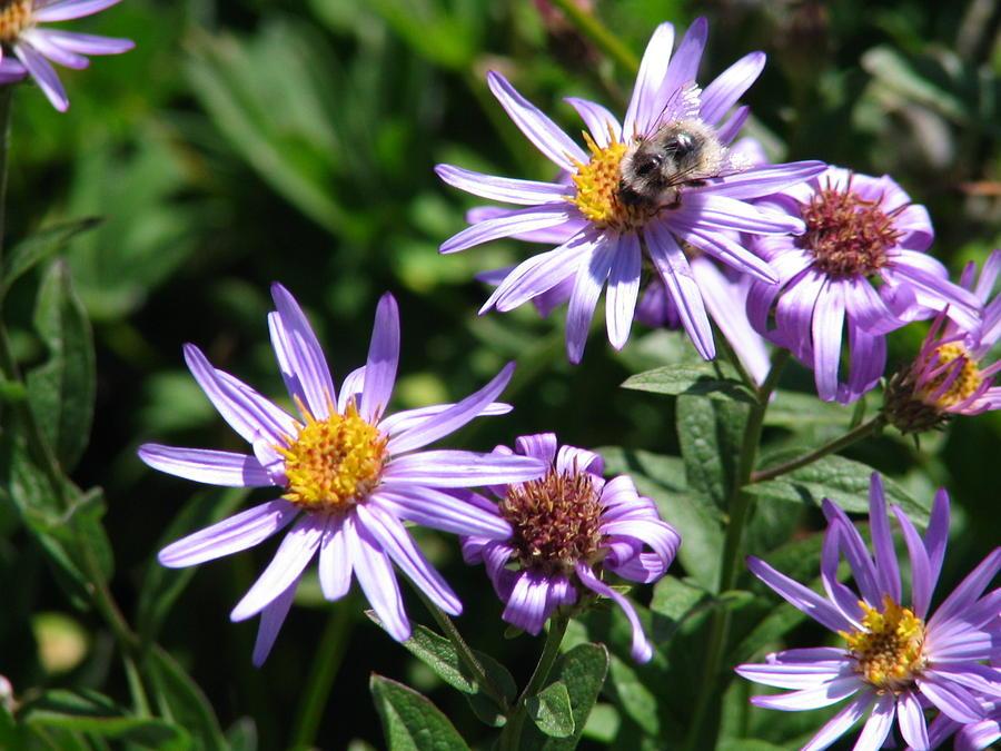 - flowers-with-bee-radhika-kulkarni