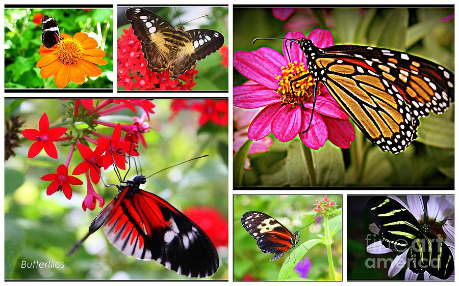 Fluttering Butterflies Photograph