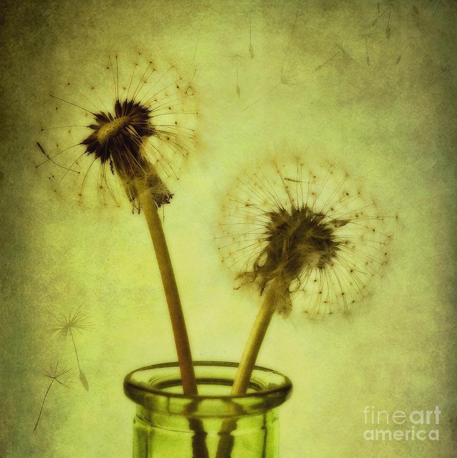 Dandelion Photograph - Fly Away by Priska Wettstein