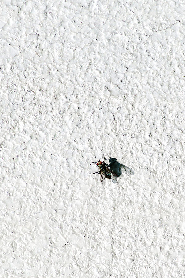 Abstract Photograph - Fly On A Wall by Alexander Senin