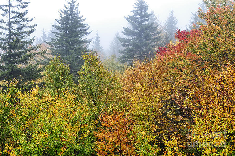 Fog Fall Day Photograph  - Fog Fall Day Fine Art Print