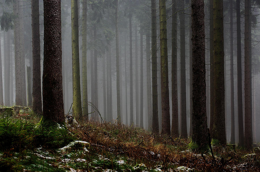 Fog Hugging The Trees Photograph  - Fog Hugging The Trees Fine Art Print