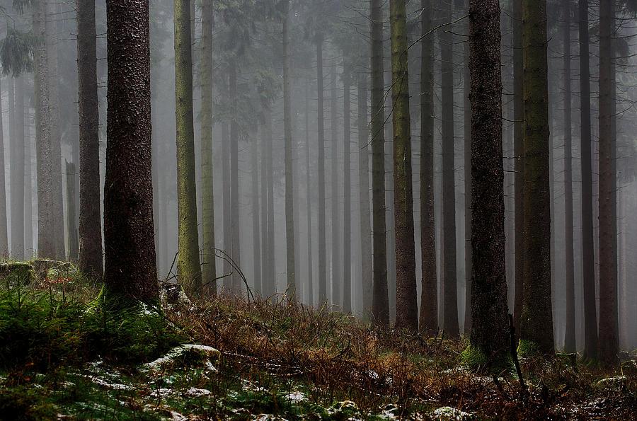 Fog Hugging The Trees Photograph