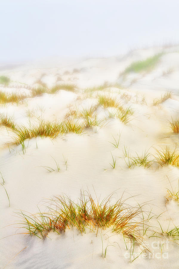 Fog Sand And Dune Grass - Outer Banks Painting  - Fog Sand And Dune Grass - Outer Banks Fine Art Print