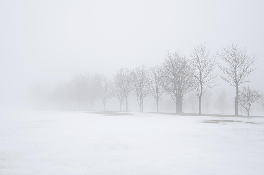 Foggy Day With Snow Photograph