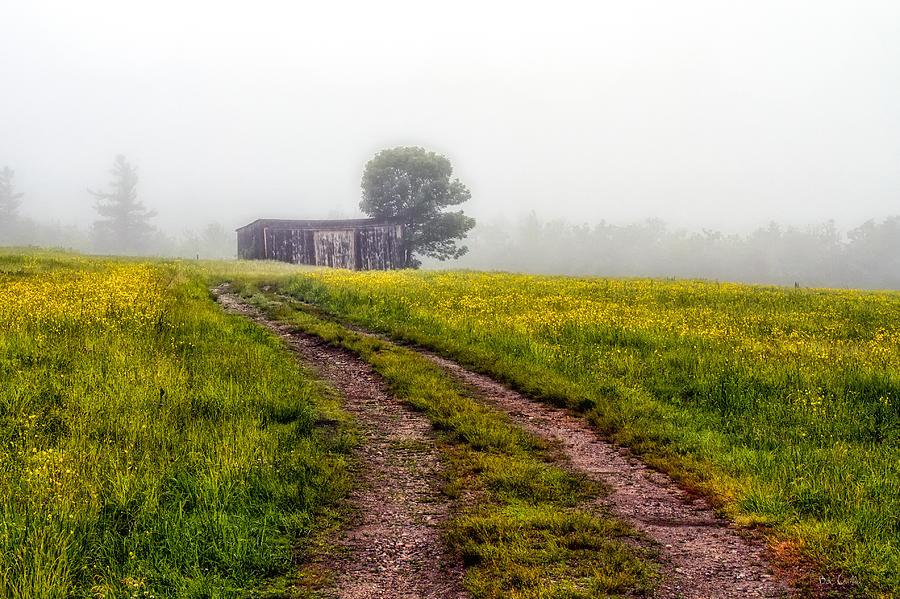 Foggy Morning Photograph