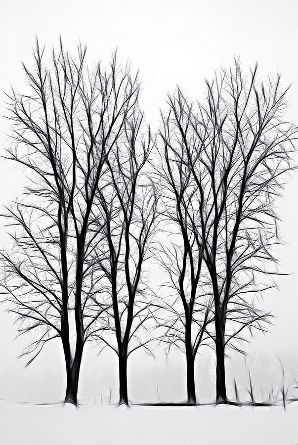 Foggy Morning Landscape - Fractalius  Photograph