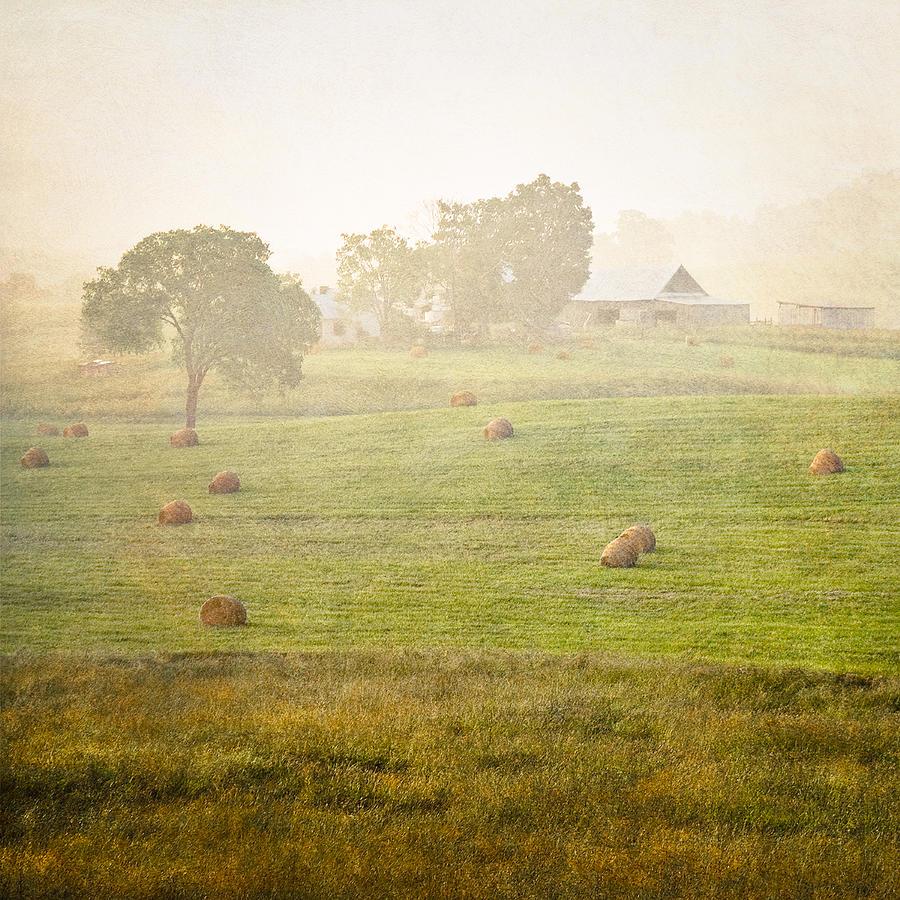 Foggy Boden Farm Lamas