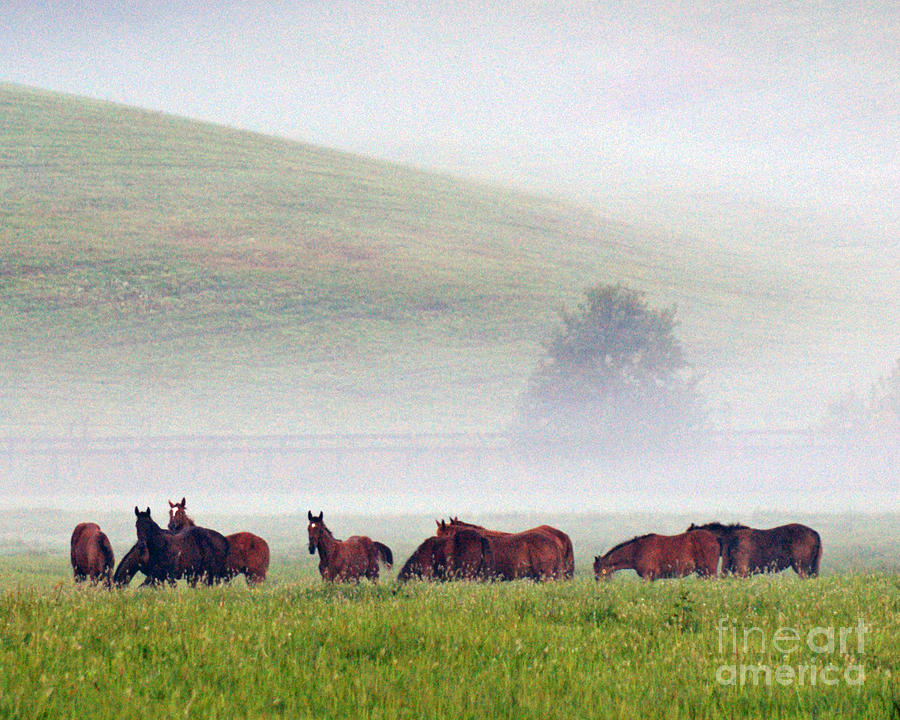Fog Photograph - Foggy Morning by Roger Potts