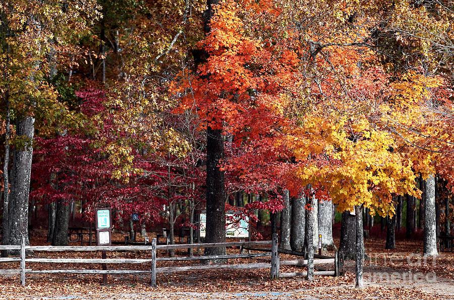 Foliage Colors Photograph - Foliage Colors by John Rizzuto