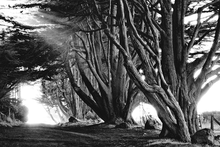 Black and white photography is truly qui by Ansel Adams ...