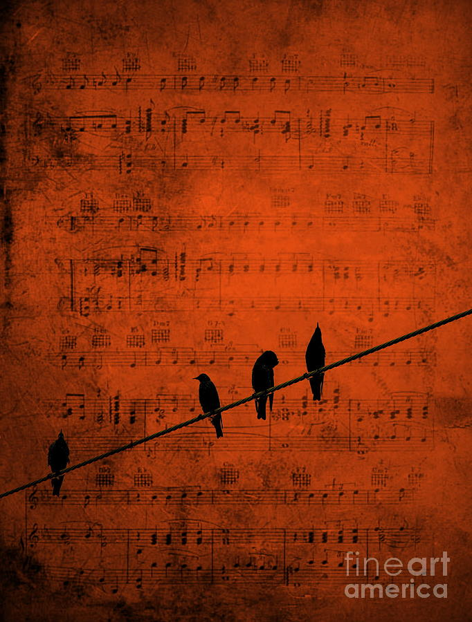 Follow The Music Photograph  - Follow The Music Fine Art Print