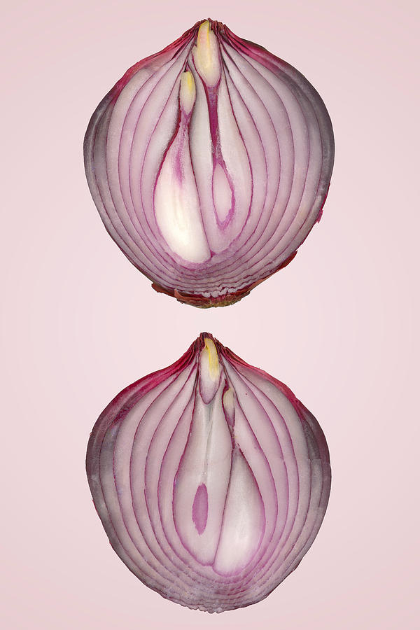 Food - Vegetable - Cross Section Of A Red Onion Photograph  - Food - Vegetable - Cross Section Of A Red Onion Fine Art Print