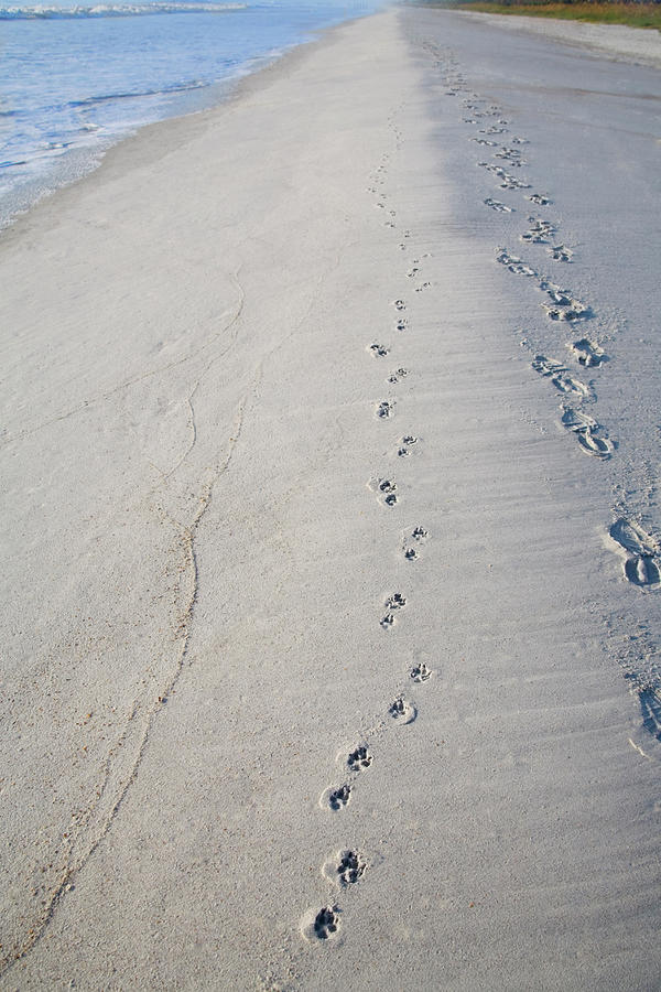 Footprints And Pawprints is a photograph by Diane Macdonald which was ...