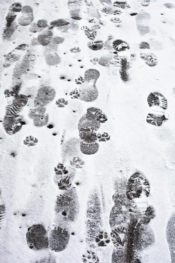 Footprints Photograph