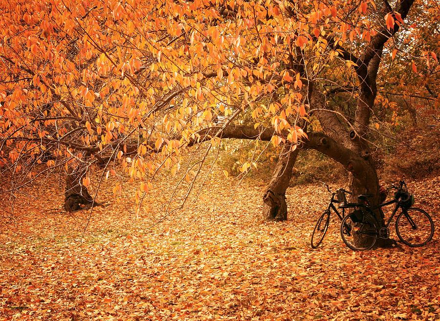 Central Park Photograph - For Two - Autumn - Central Park by Vivienne ...