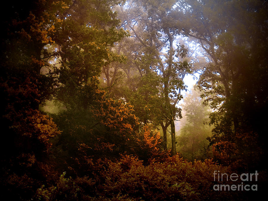 Forest Autumn Colors Photograph  - Forest Autumn Colors Fine Art Print