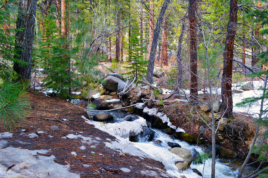 Forest Creek 4 Photograph