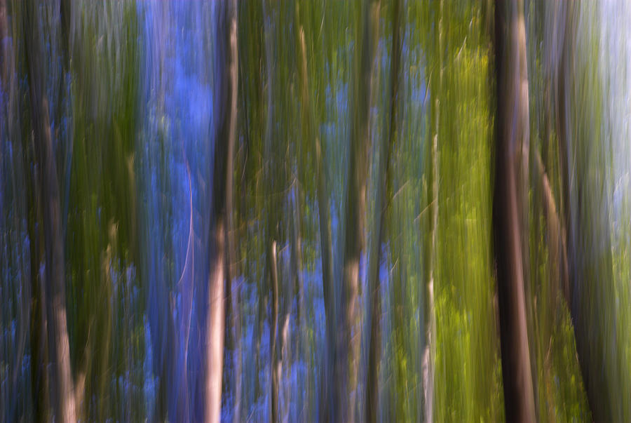 Forest Dreams Photograph  - Forest Dreams Fine Art Print