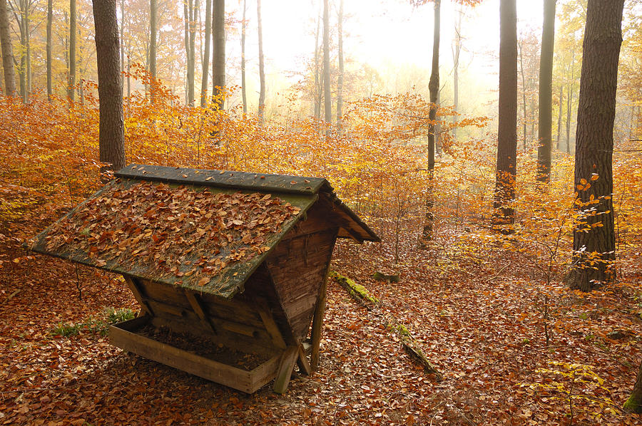 Forest In Autumn With Feed Rack Photograph